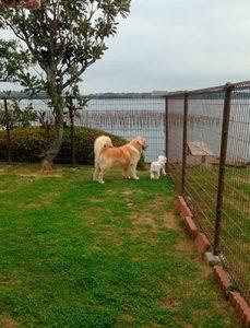 浜名湖とハッピーとシュガー