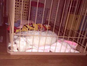 ポニーの寝姿