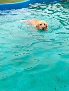 泳ぐハッピー
