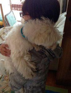 しほちゃんに抱かれるもしゃもしゃシュガー