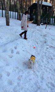雪の中でしほちゃんとポニー