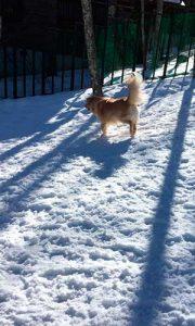 雪の中のハッピー