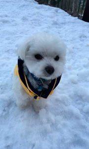 雪の中でお座りするポニー