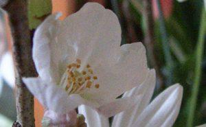 桜が咲いたの