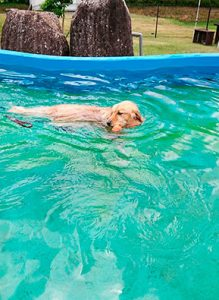 プールで泳ぐハッピー
