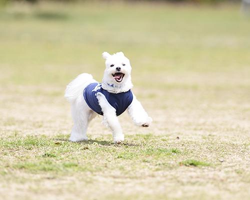 遊びながら走るシュガー