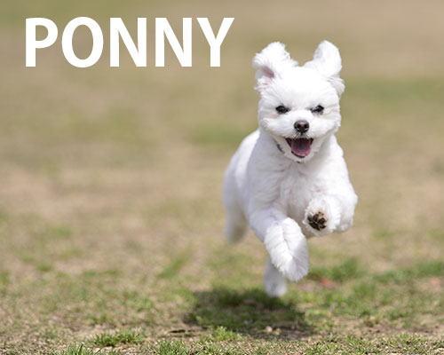 たまにしか走らないポニー